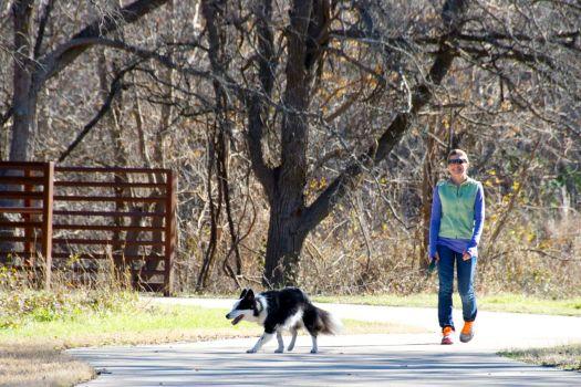 Border collies love their walks...